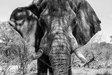 Awesome South Africa Collection B&W - Elephant Portrait VII Papier Photo par Philippe Hugonnard