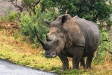 Awesome South Africa Collection - Rhinoceros
