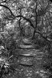 Awesome South Africa Collection B&W - African Forest