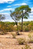 Awesome South Africa Collection - African Savanna Landscape II