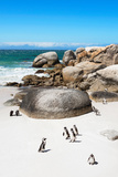 Awesome South Africa Collection - African Penguins at Boulders Beach X