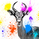 Safari Colors Pop Collection - Antelope Reedbuck III