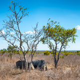 Awesome South Africa Collection Square - Two Rhino sleeping in the Savanna