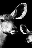 Safari Profile Collection - Antelope and Baby Black Edition VI