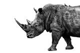 Safari Profile Collection - Rhino White Edition Papier Photo par Philippe Hugonnard