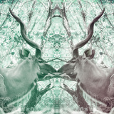 Awesome South Africa Collection Square - Reflection of Greater Kudu - Coral Green & Dimgray