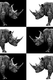 Safari Profile Collection - Rhinos