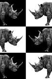 Safari Profile Collection - Rhinos Papier Photo par Philippe Hugonnard