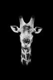 Safari Profile Collection - Portrait of Giraffe Black Edition II
