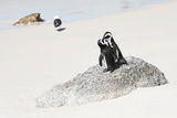 Awesome South Africa Collection - Penguin Lovers