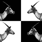 Safari Profile Collection - Antelopes Impalas II