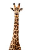 Safari Profile Collection - Giraffe White Edition VII