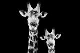 Safari Profile Collection - Portrait of Giraffe and Baby Black Edition VI