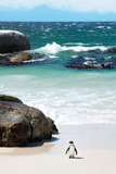 Awesome South Africa Collection - Penguin at Boulders Beach