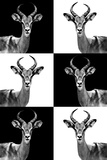Safari Profile Collection - Antelopes