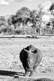 Awesome South Africa Collection B&W - White Rhino
