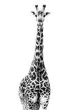Safari Profile Collection - Giraffe White Edition II