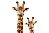 Safari Profile Collection - Portrait of Giraffe and Baby White Edition V