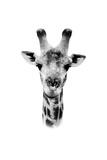 Safari Profile Collection - Portrait of Giraffe White Edition II