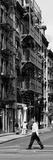 Safari CityPop Collection - Animal Kingdom in Manhattan V