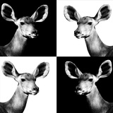 Safari Profile Collection - Antelopes Impalas Portraits II