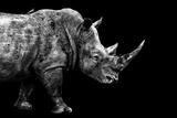 Safari Profile Collection - Rhino Black Edition Papier Photo par Philippe Hugonnard