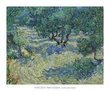Olive Orchard  1889