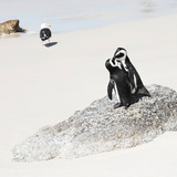 Awesome South Africa Collection Square - Penguin Lovers