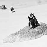 Awesome South Africa Collection Square - Penguin Lovers B&W
