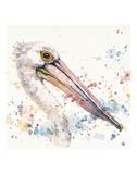 Pelicans About