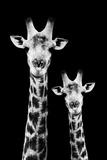 Safari Profile Collection - Portrait of Giraffe and Baby Black Edition IV Papier Photo par Philippe Hugonnard