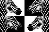 Safari Profile Collection - Zebras III
