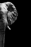 Safari Profile Collection - Elephant Black Edition IV