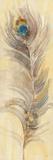 Blue Eyed Feathers II