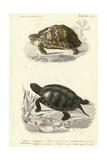 Antique Turtle Duo II