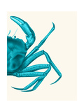 Contrasting Crab in Turquoise a Reproduction d'art par Fab Funky