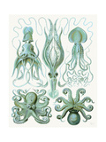 Turquoise Octopus and Squid b Reproduction d'art par Fab Funky