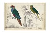Parrot Pair I