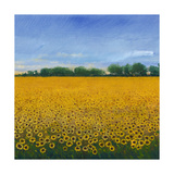 Field of Sunflowers II