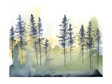 Shadow Forest II