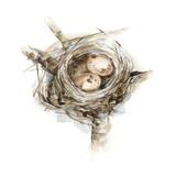 Bird Nest Study I
