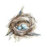 Bird Nest Study II