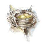 Bird Nest Study III