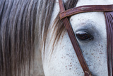 Close Up of Horse Wearing Bridle  Sierra De Gredos  Avila  Castile and Leon  Spain