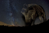 Wild Boar (Sus Scrofa) at Night with the Milky Way in the Background, Gyulaj, Tolna, Hungary Papier Photo par Bence Mate
