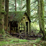 Rotting Wooden Shed Covered in Moss  Washington State  Usa