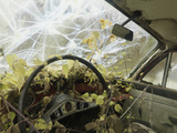 Interior of Abandoned Car  with Nettles Growing Inside and a Smashed Windscreen  Varmland  Sweden