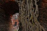 Historical Building in Ishwaripur  Overgrown by a Banyan Tree (Ficus Benghalensis)  Bangladesh