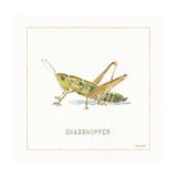 My Greenhouse Grasshopper
