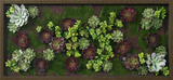 *Exclusive* Winter Faux Succulents Wall Garden